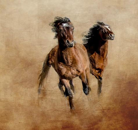 Colorado Wild Mustangs