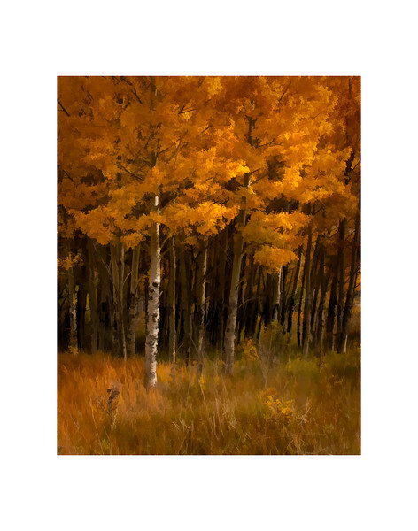 Caribou Ranch Aspens<br /> Colorado