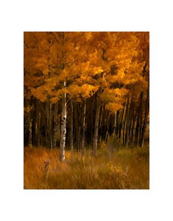 Caribou Ranch Aspens Colorado