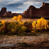 Fall Cottonwoods in The Park<br /> Arches National Park<br /> Moab, Utah
