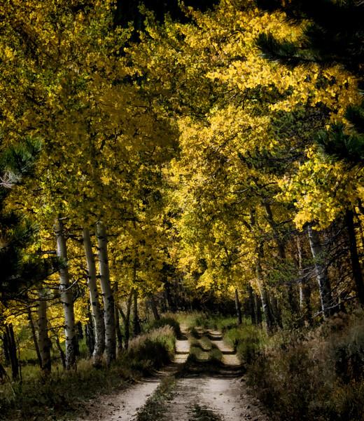 Fall Aspens at Caribou Ranch Colorado