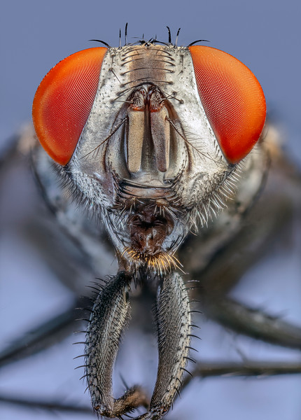 Flesh Fly ECU