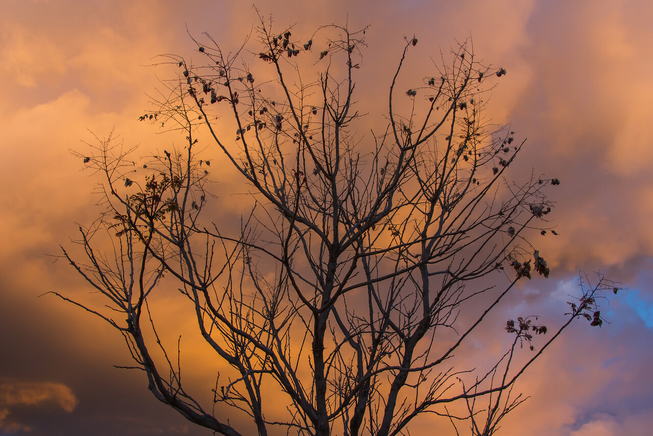 Orange Tree Orange Tree
