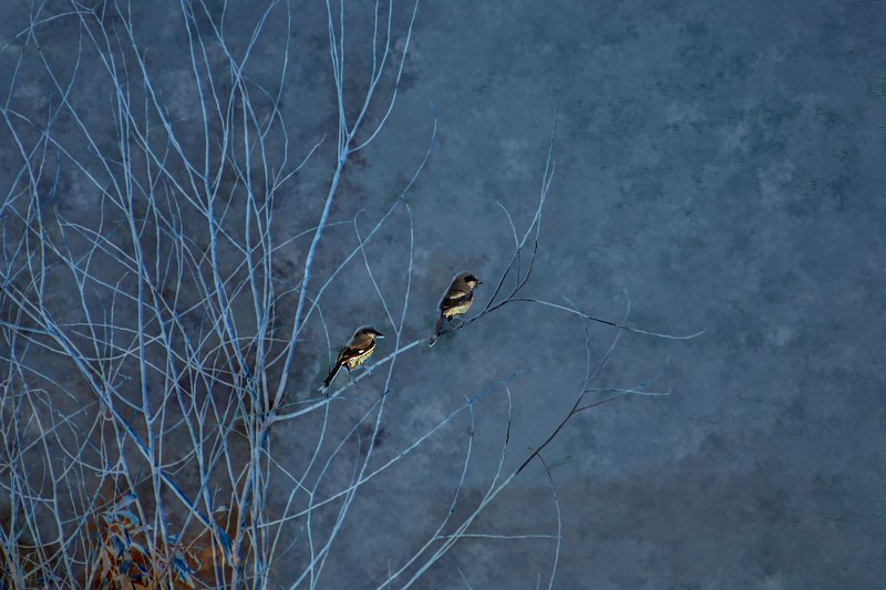 Park Birds_41340001