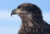 Eagle_1988