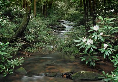 Chester Creek