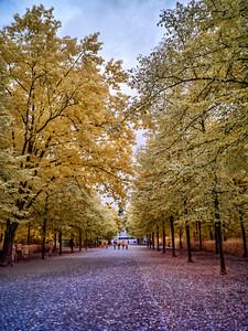 Tiergarten Park in Berlin IR