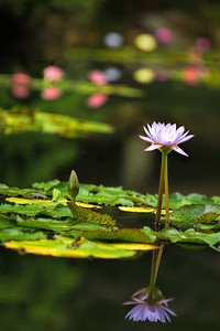 Lying on the ground at the edge of the pond to achieve this composition...worth the effort!