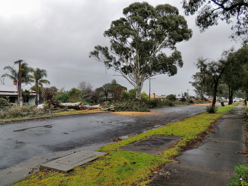 Recent Storm 2012 in Orbost..Boundary Road.. 7 Trees down