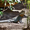 Water Dragon Genoa falls, Photo, Phillipa Hamilton