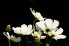 BACKLIT COSMOS