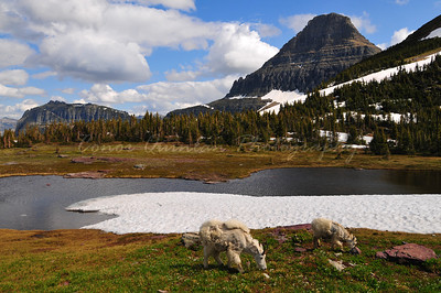 Glacier national park is of the most beautiful national parks in the world, with huge mountains and outstanding wildlife.