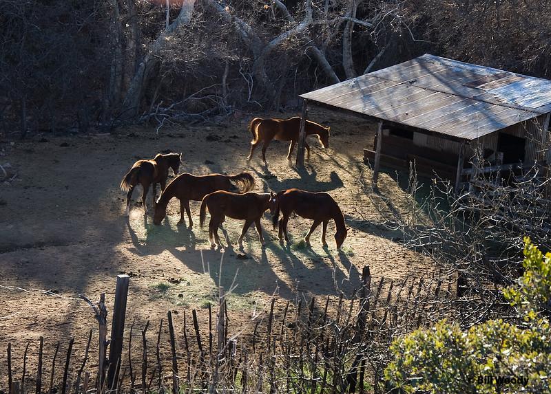At Adobe Ranch