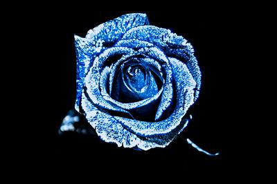 Wondrous Blue