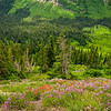 Flowers | Glacier National Park