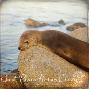 Sea Lion shot in Monterey