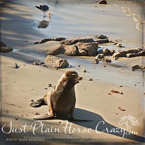 Harbor Seal shot in Monterey
