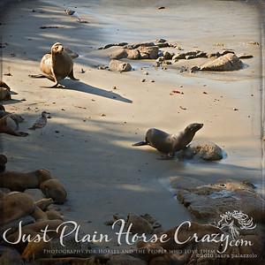 Harbor Seals shot in Monterey