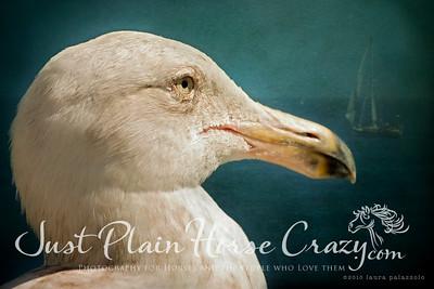 Portrait of a Seagull shot at Santa Cruz Pier