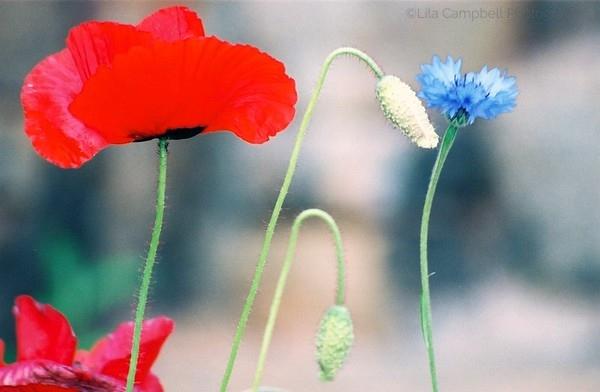 RWB Flowers