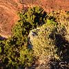 Plant Life at the Grand Canyon in Arizona