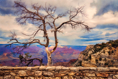 GC Tree Painted