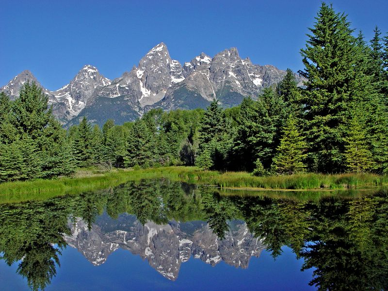 Teton Reflections in in a beaver pond,  Grand Teton Natl Park, early morning in July.