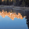 Reflections of early morning light on beaver pond