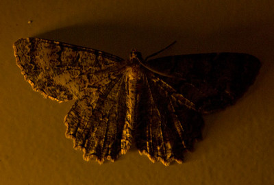 I spent way too long shooting this moth. This was the second frame.  There were many more afterward.