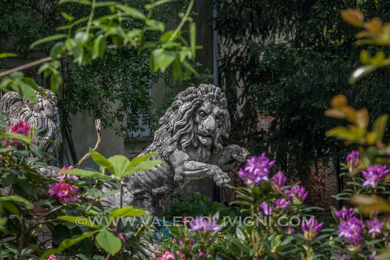 A stone lion inside the courtyard of Barbavara mansion. Un leone in pietra nel giardino della villa dei conti Barbavara