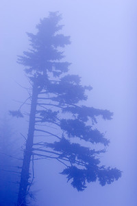 We went to Clingman's Dome for a sunrise shoot but...alas...dense fog.  There were still some nice shots of fog shrouded trees.