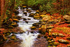Mountain Stream in Fall Colors