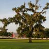 barn-tree