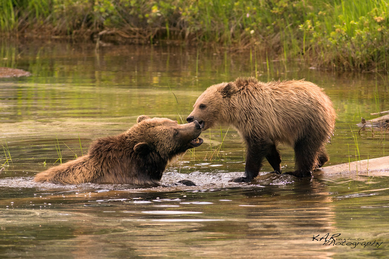 Mom and cub play in a pond.