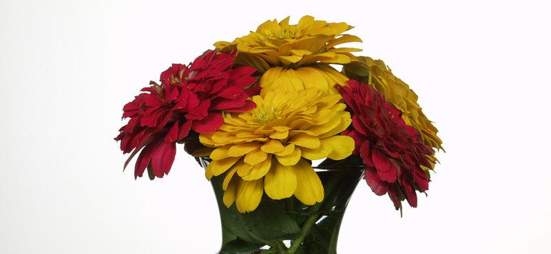 Five Flowers