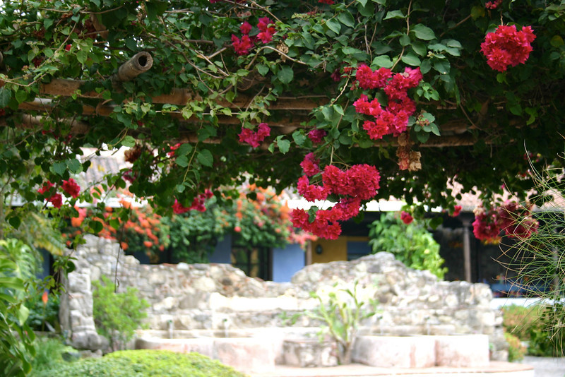 Flowers at Hotel Quinta de las Flores- Antigua