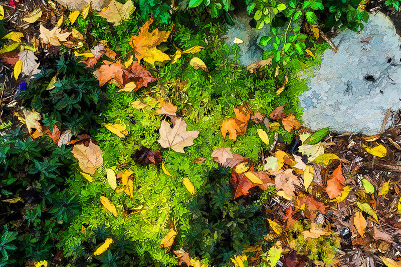 Filtered version:  All fall down - accidental grouping of fallen leaves and planted plants