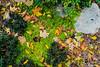 All fall down - accidental grouping of fallen leaves and planted plants