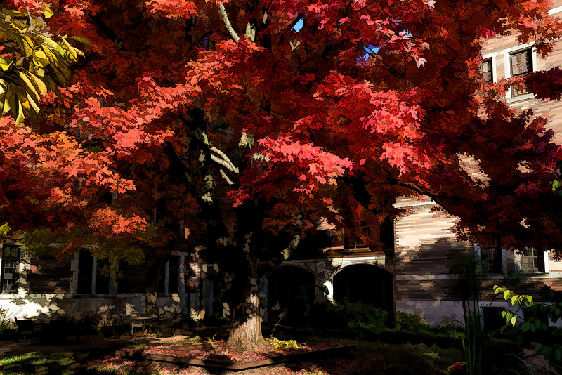 Courtyard, Michigan League, dominated by red maple tree - filtered version
