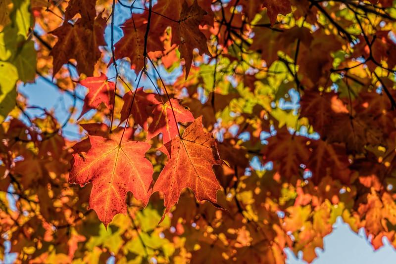 D278-2016  <br /> <br /> County Farm Park, Ann Arbor<br /> Taken October 5, 2016