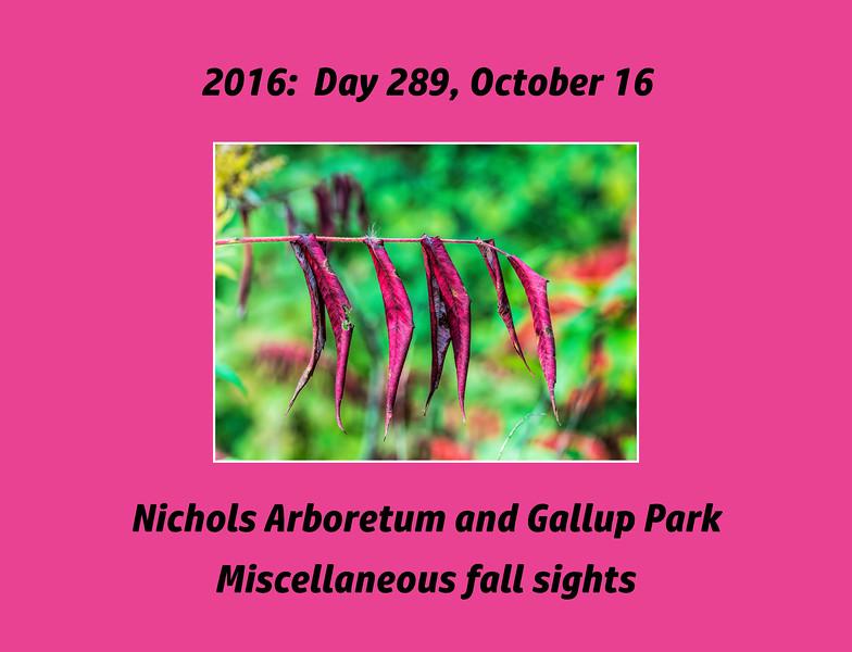 Photoset for October 16, 2016, Nichols Arboretum