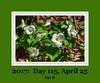 Photoset ID image:  17115b, (April 25, 2017)