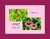 Photoset ID image:  17178 (June 27, 2017)
