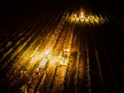 Night Harvest, 9/19/15