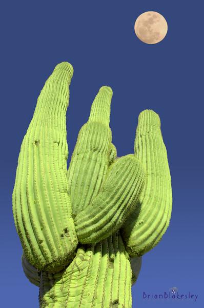 saguaro_HDR-550887621-O