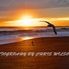 Mel Bch Sunrise HDR 004