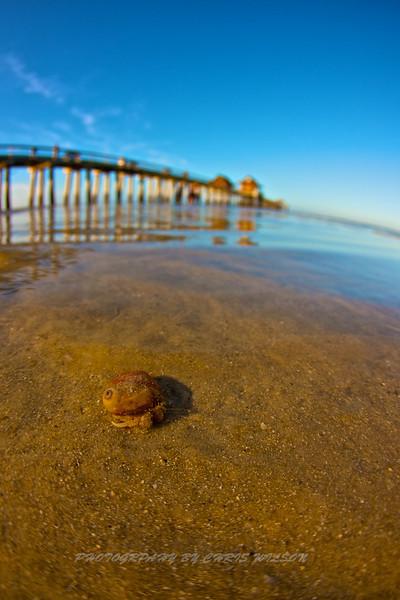 Hermit Crab and Naples Pier