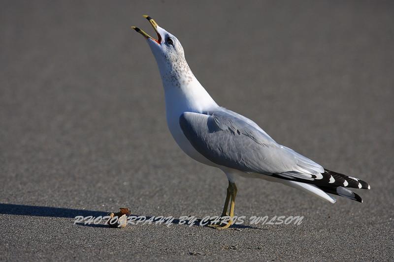 Beach Seagull HDR 1