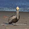 Pelican HDR 01