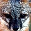 Hatteras Fox-2